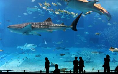 Portrait : à la rencontre de l'Aquarium de Paris – Cinéaqua